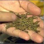 Очередной измаильчанин попался на марихуане