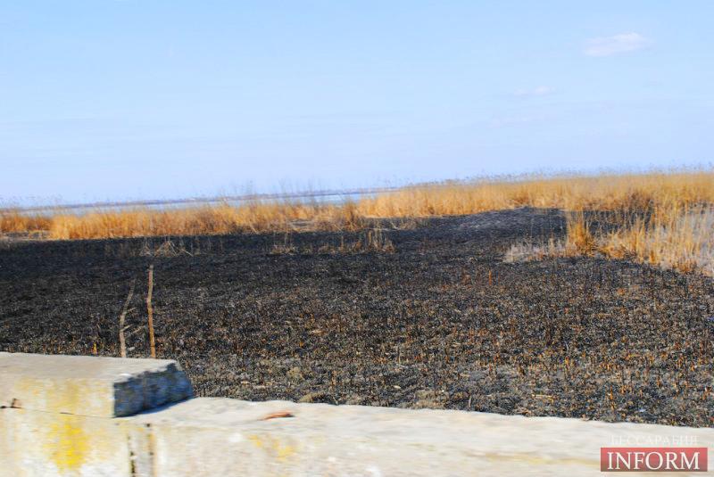 Килийский район: найдут ли поджигателя камыша? (фоторепортаж)