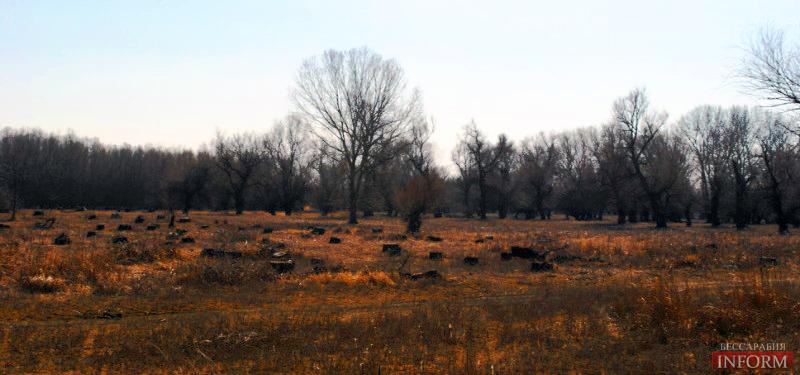 Измаильский район: кто ответит за вырубленные деревья? (фоторепортаж)