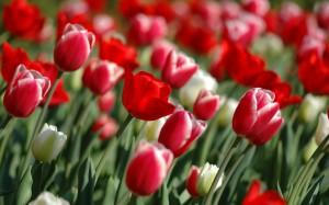 Весна глазами Бессарабцев