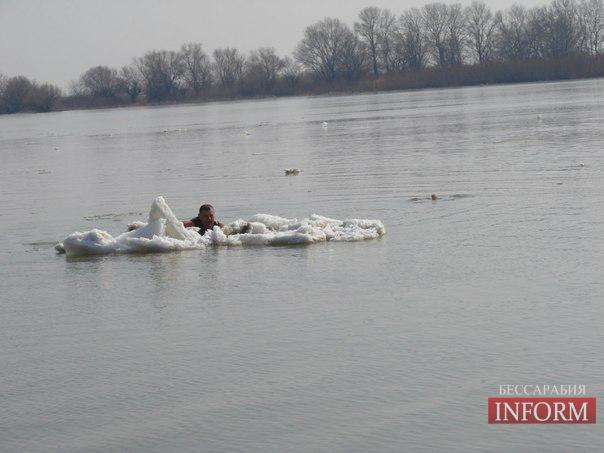 Форсирование Дуная моржами - началось!