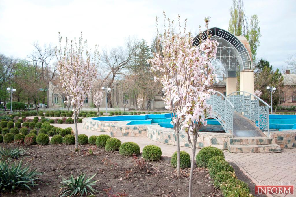 В Бессарабии расцвела САКУРА - дерево любви