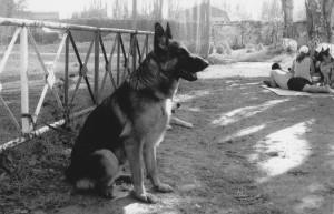 Измаильские собаководы одержали победу на Всемирной выставке