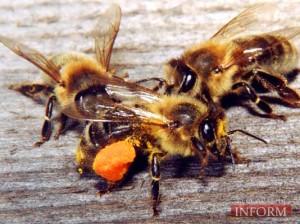 Здоровье — в продуктах  пчеловодства