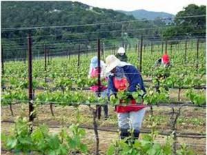Болград: 37 человек отравились при работах на виноградниках