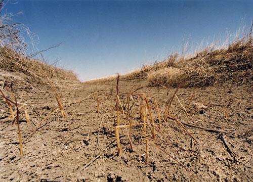 Одесская область страдает от засухи.