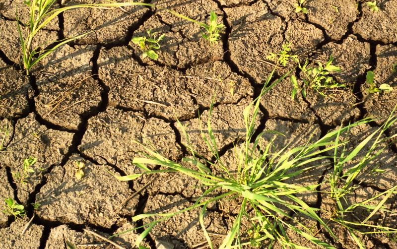 Через 20 лет на юге Украины может быть климат как в пустыне Калахари!