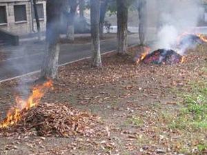 За сжигание опавшей листвы будут штрафовать!