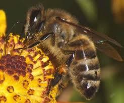 Пчеловоды Одещины недовольны прошедшим летом.