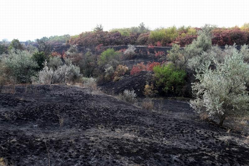В Одесской области сожгли уникальную степь