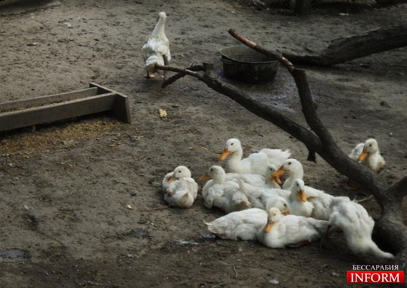 Измаил. Проблемы и радости Станции юных натуралистов! ФОТО+ВИДЕО