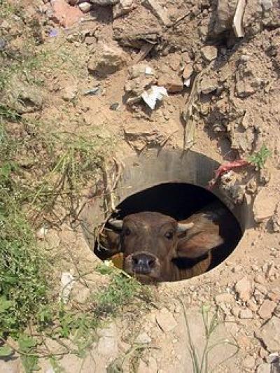 В Одесской области МЧС спасали корову.