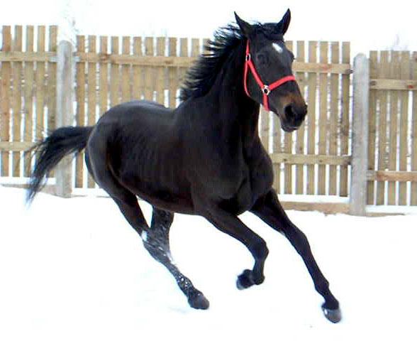 В Ильичевске планируется построить конно-спортивный клуб.