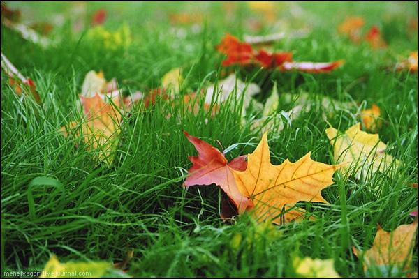 В Измаил пришла осень.