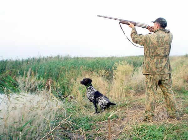 Охотникам на заметку. Килийский фазан никого не боится.
