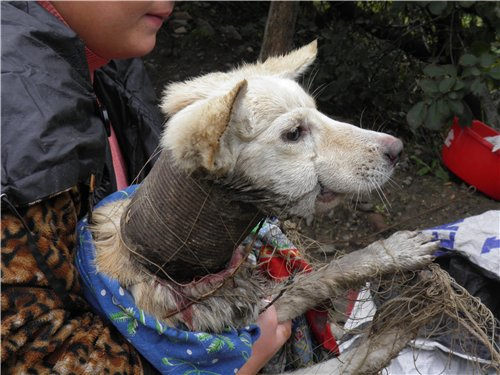 В Одессе нашли щенка с консервной банкой на шее! Человеческая жестокость не знает границ.