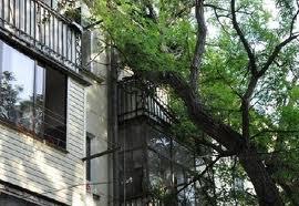 На Одесчине дерево рухнуло на крышу военкомата