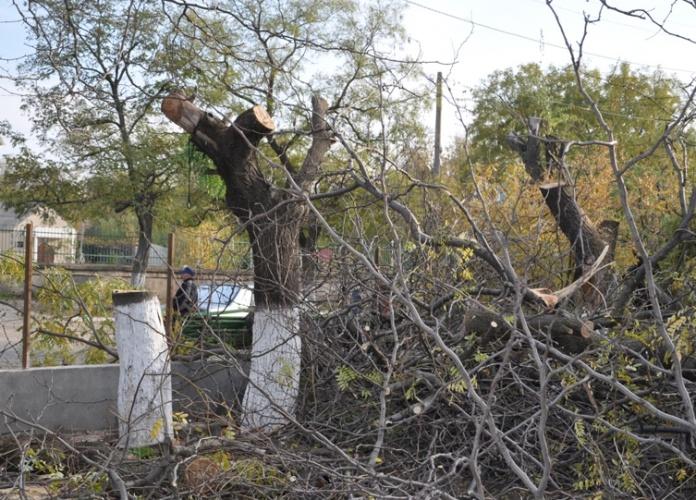 В центре Болграда уничтожают зелёные деревья. ФОТО