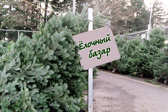 В Бессарабии пока официально не работает ни один елочный базар