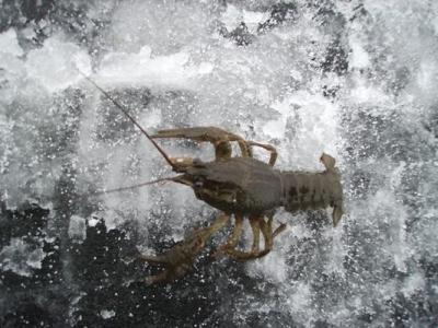 Лов рыбы запрещен!
