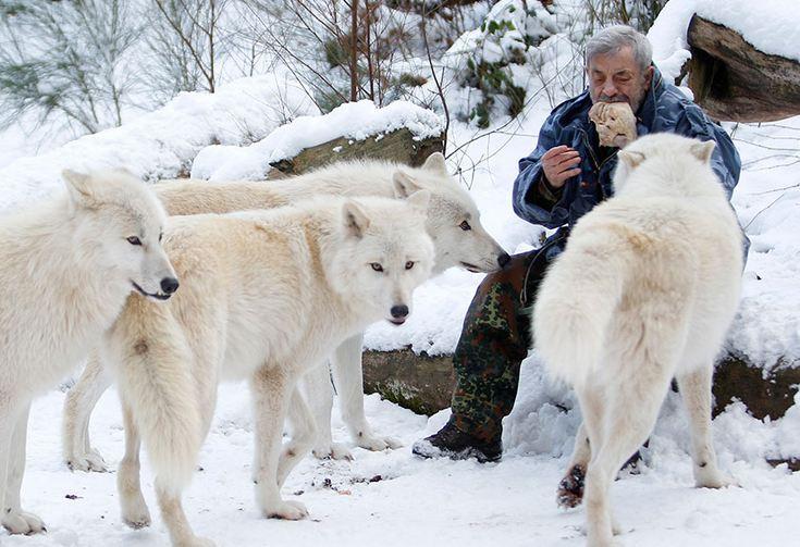 Фото дня: человек волк