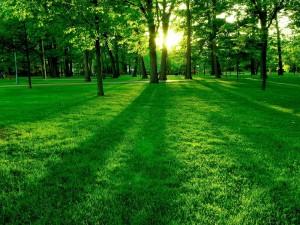 Лес-135-300x225 У «Измаильского лесного хозяйства» отобрали  земли более чем на 19,3 млн. грн.