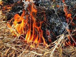 Белгород-Днестровский: сгорел гектар травы
