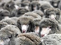 Измаильский район: заезжие бандиты пытались украсть 300 овец