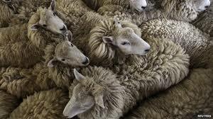 Арциз: украл 150 овец - получи 4 года тюрьмы