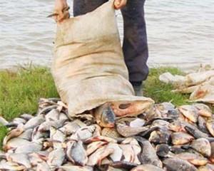 В Измаиле попался браконьер с 28 кг рыбы