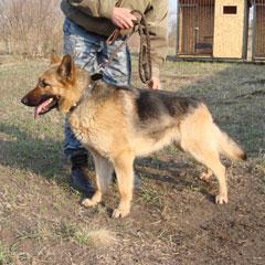Болград:  служебная собака обнаружила странное вещество
