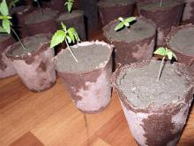 Рени: посадила коноплю, но использовать не успела