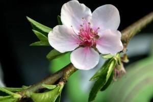 В Бессарабию пришла весна
