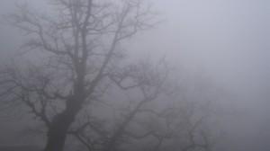 Бессарабия: осторожно, завтра из-за тумана сложная дорожная обстановка