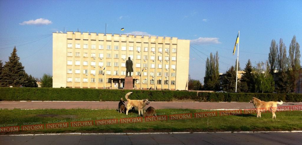 zlue sobaki 1 Фото дня: осторожно в Измаил атакуют злые собаки!