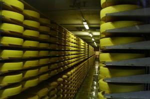 В Болградском районе появится свой сыр