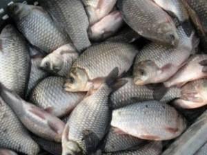 В Измаильском районе продолжают незаконно ловить рыбу