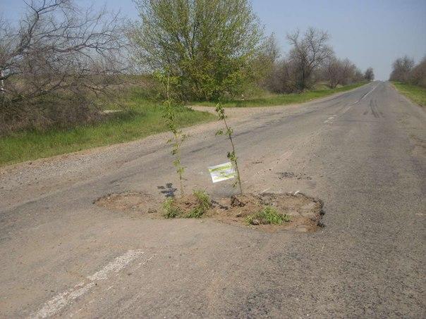 В выбоинах на трассе Измаил - Болград высадили деревья