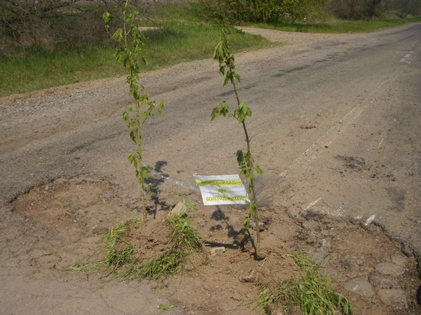 JmlpUQOMGv0 В выбоинах на трассе Измаил   Болград высадили деревья