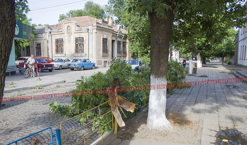 Измаил: Из-за сильного ветра около школы упало дерево! (фото)
