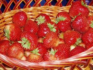 Бессарабия готовится к большому урожаю  клубники