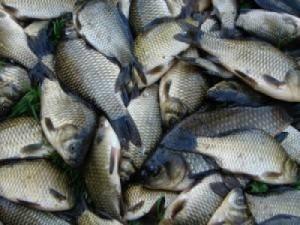 В Татарубнарском районе рыбаки нанесли убытков на 12750 гривен