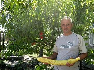 Измаильский район: в Утконосовке вырос огурец длиной 72 см.(фото)