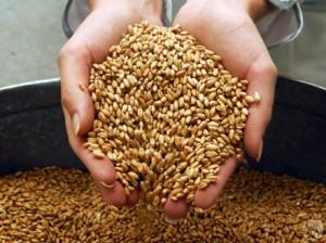 В Бессарабии собрали уже 1,8 млн. тонн зерна урожая