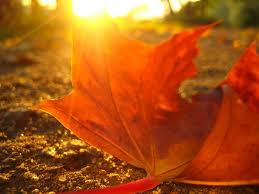 Теплая погода в Бессарабии продержится до 15 сентября