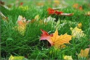 осень-300x200 В Украине завтра тепло и облачно
