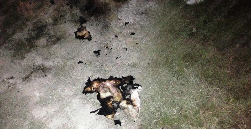 podjog cheri izmail 1 В центре Измаила сожжен очередной автомобиль! (фото, видео)