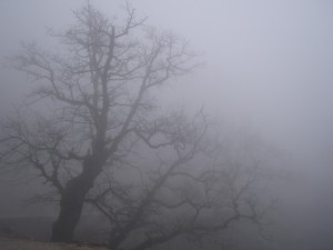 ГАИ Одесской области предупреждает - сильный туман