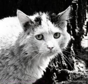 В Измаиле живодеры сжигали котят на глазах у детей