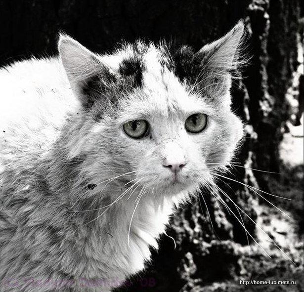 Картинки грустные котята с надписями